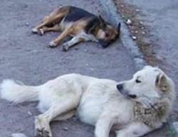 Собак отдали мэрии