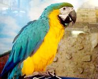 В Волгоград на выставку привезли говорящих попугаев