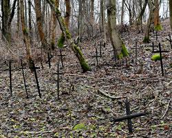Ситуация со строительством кладбища привлекла внимание прокуратуры