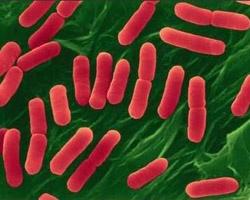Магазинная еда в Уфе: бактерии против людей