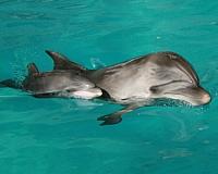 В челнинском дельфинарии родился дельфиненок