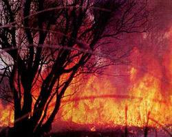 Лесные пожары подобрались к Архангельску