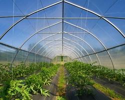 Инвестор позаботится об овощах и детях