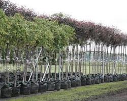 В Ростове появится Парк именных деревьев