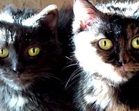 В Перми 20 кошек едва не погибли в запертой квартире