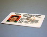 Новые водительские удостоверения появятся в России уже весной