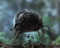 Черный жук рекламирует новый Volkswagen