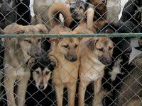 В собачьем приюте в Катунино выявлены нарушения закона