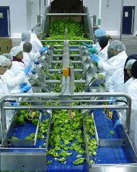 Москвичи отсортируют волгоградские овощи