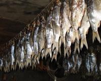 В Волжском прикрыт подпольный рыбный цех