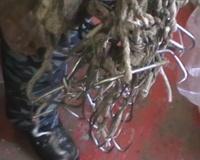 Полицейские обнаружили очередной подпольный рыбный цех