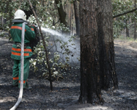 Бушевавший более суток во Фроловском районе природный пожар потушен