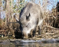 В регионе из-за морозов организована усиленная подкормка диких животных
