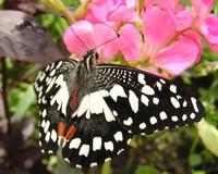 Волгоградцы могут увидеть появление на свет бабочек