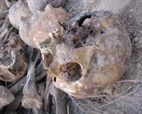 Археологи исследуют старое кладбище в городском саду Волгограда