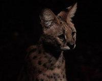 Ночной зоопарк предлагает угадать животное по прикосновению