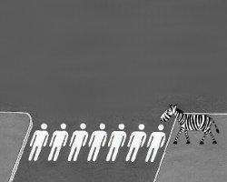 С улиц пропадают зебры