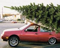 Купил машину – посадил дерево