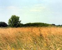 За нецелевое использование сельхозугодий можно лишиться земли