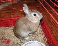 Зоозащитники мечтают поставить памятник кроликам