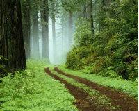 В Пермском крае выявлено более 400 незаконных рубок леса