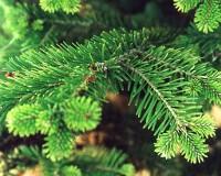 Пермские елки украсили дома 200 тысяч россиян