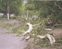 В Кировском районе упавшее дерево придавило ребенка
