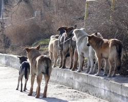 На отлов бродячих животных мэрия Самары потратит 10 миллионов рублей