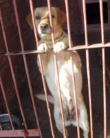 За выгул собак без пакета для экскрементов могут ввести штраф