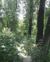 Из-за жары тюменцам ограничат доступ в леса