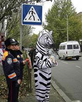 Почти 400 тюменских «зебр» представляют опасность для пешеходов