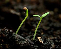 «Травы Сибири» работают под внешним управлением