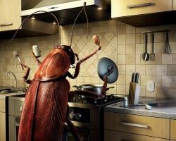 Охотники за тараканами