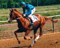 Конно-спортивый праздник «Буян-2009»