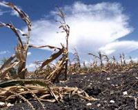 Борьба с засухой в Челябинской области: Москва шлет 770 миллионов