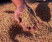 Областные власти примут участие в создании Уральской зерновой компании