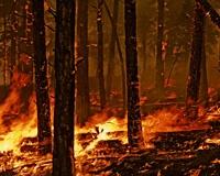 Пожары в Миасском и Северном лесничествах ликвидированы