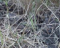 На Южный Урал пришли еще 204 миллиона рублей на борьбу с потерями от засухи