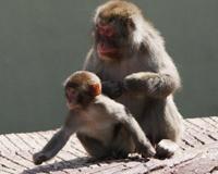 В челябинском зоопарке из-за гриппа закрыли для посетителей зал приматов