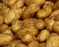 В Челябинской области задержаны 174 тонны афганского картофеля