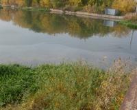 Река Миасс в Челябинске покрылась нефтяной пленкой