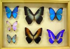 Челябинский краеведческий музей заполонили бабочки