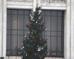 К Новому году в Ярославле будет установлено восемь елей