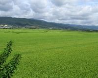 Земли сельхозназначения будут изымать по-новому