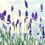 50 оттенков фиолетового: с подиума в интерьер