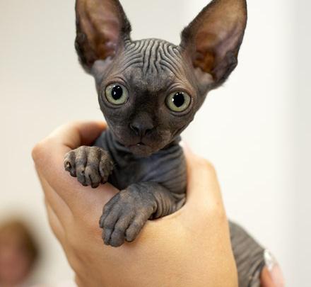 Международная выставка кошек всех пород в ТРЦ «Горский»