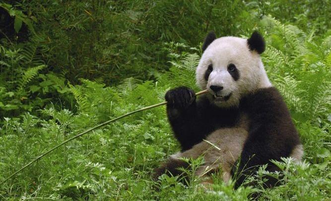 В Китай — с «Глобус-туром»