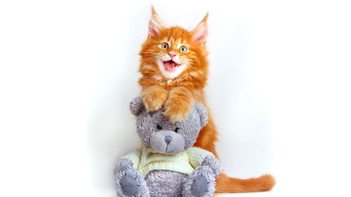 Выставка кошек в Новосибирске 1 и 2 июня пройдет в ТЦ «Манхэттен»