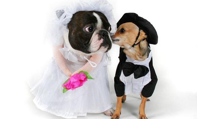 Продолжение сезонного шоу «Свадьба в «Собаке»!