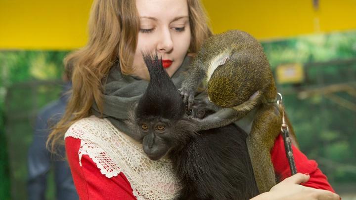 Обезьянки остались в Новосибирске, чтобы поздравить детей с Новым годом
